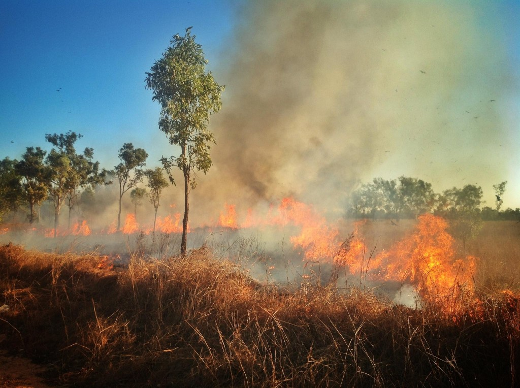 Grass fires are an every day occurrence during the dry season. Everything gets burnt.