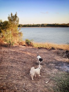 traveling and camping with dogs friendly
