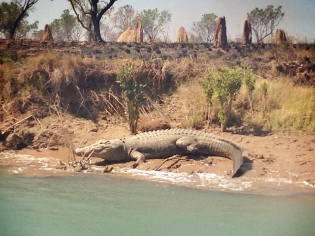 Traveling Australia and Croc Safety