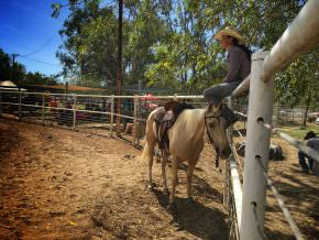 Borroloola Rodeo Cowgirl